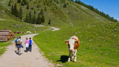 Wanderer entlang der Villacher Alpenstraße neben einer Kuh