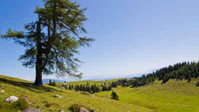 Baum im Naturpark Dobratsch